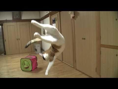 Gatos - Gatos saltando en cámara super lenta