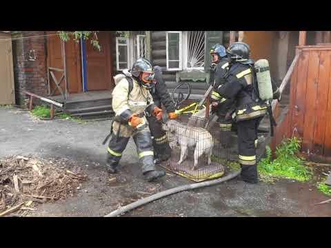 Пожарные спасли кота и собаку из горящей квартиры в Томске