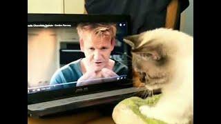 Gordon Ramsay Teaches Cat to Knead Dough || ViralHog