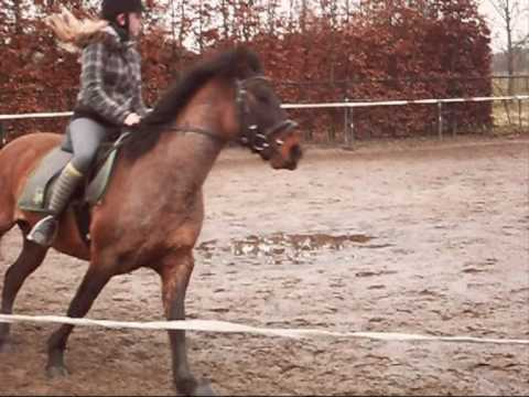 My Criollo horse Video