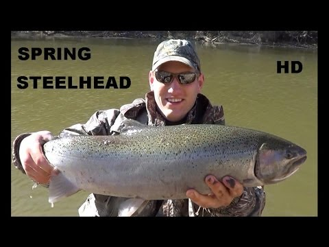 SPRING STEELHEAD FISHING 2014