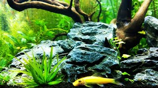 Low Tech low budget planted tank | 7 tips on how to setup a low Tech planted tank in Hindi