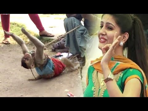 Sapna Chaudhary Bhi Fan Ho Gai Is Bandariya Ka Dance Dekh Ke - Comedy Funny Video From My Phone