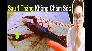 Hồ Tôm Kiểng Siêu Dữ Tợn Và Hồ Cá Betta Sau 1 Tháng Bỏ Hoang 🐠 Ryan Nguyen_The Fish Lover