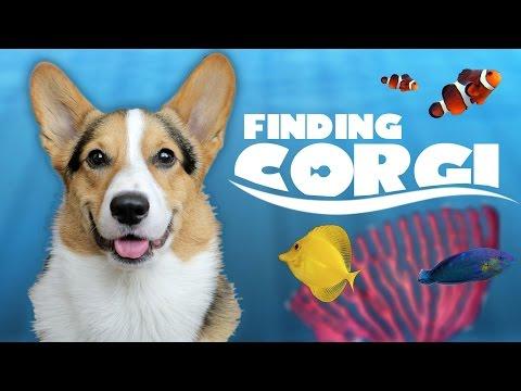 CORGI FINDS FINAL FISH TANK FRIEND | AQUARIUM COMPLETE! - Life After College: Ep. 488