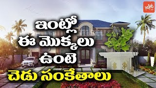 These Plants at Home are Bad Signs of Architecture | Astrology | Horoscope
