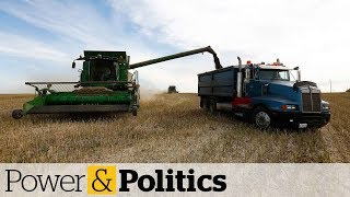 Agriculture minister talks canola spat with Chinese counterpart | Power & Politics