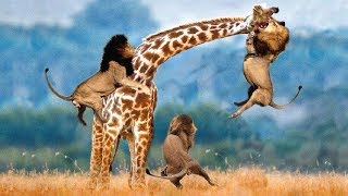 (0 MB) LIVE: AMAZING Moments Of Animal Fight Battle - Discovery Wild Animal Planet 2018 Mp3
