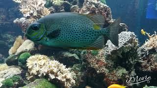 AQUARIUM DANSING FISH ouwehands dierenpark NETHERLANDS