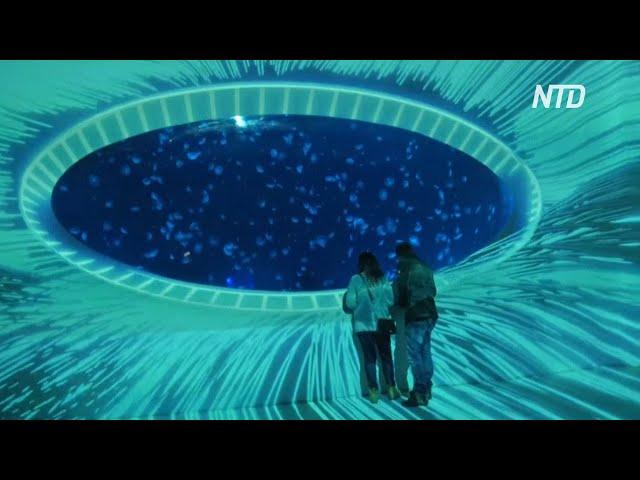 10 000 медуз плавают в аквариумах на крыше торгового центра в Праге