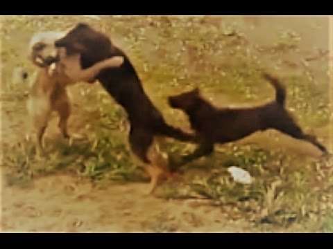 While dogs were fighting look what happened!!!