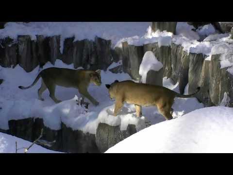 雪の円山動物園