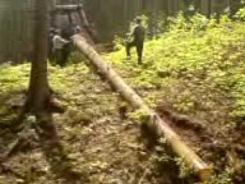 Pozyskanie i zrywka drewna
