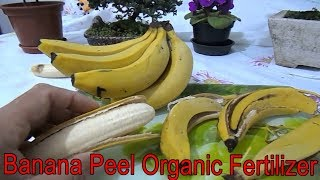 You'll Never Throw Away Banana Peels After Watching This | Recycling| DIY