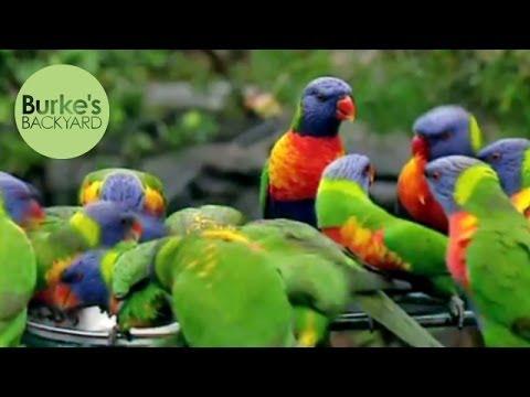Burke's Backyard, Attracting Birds To Your Garden