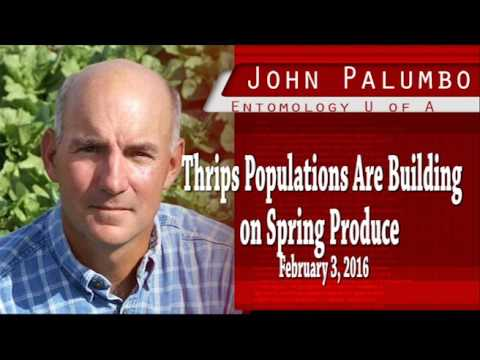 Thrips Populations Are Building on Spring Produce   JP020316