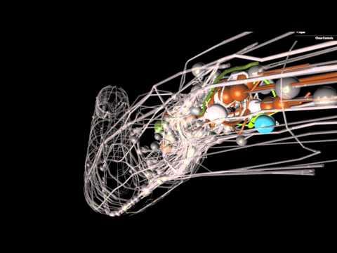 OpenWorm: An open-source C. elegans nematode simulation
