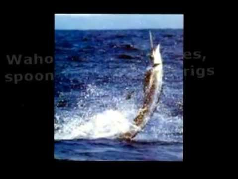 Costa Rica Sport Fishing.com Gun Smoke|Call (888) 995-1507