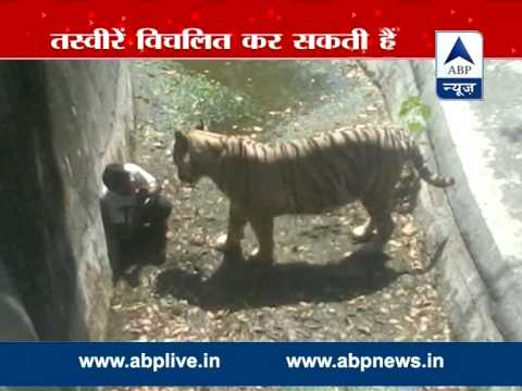 SHOCKING VIDEO: White tiger kills youth at Delhi zoo