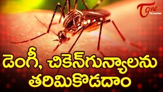 How To Prevent Dengue and Chikungunya || #DengueSymptoms #ChikungunyaFever