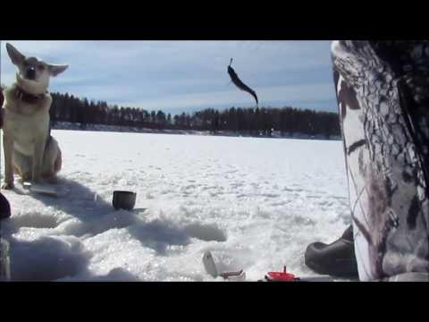 рыбалка на ламбушке видео