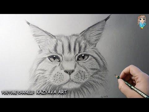Как поэтапно нарисовать мейн куна поэтапно