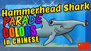 Hammerhead Sharks Teach Chinese Language Colors Educational Language Video for Kids