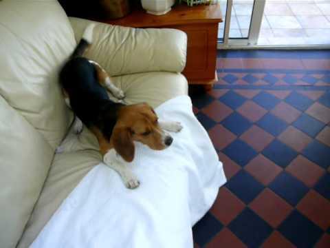 Beagle vs. Eamon Gilmore