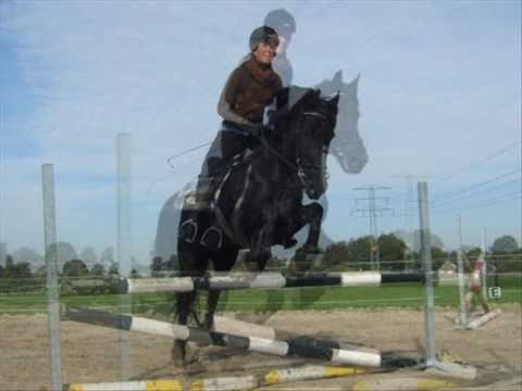 Friesian Horses Jumping Friesian Horse Jumping