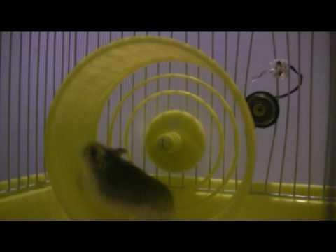 Hamster Wheel Power Hamster Power Plant