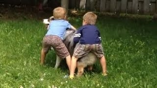 Dog playing keep away from kids...Dad then shows who