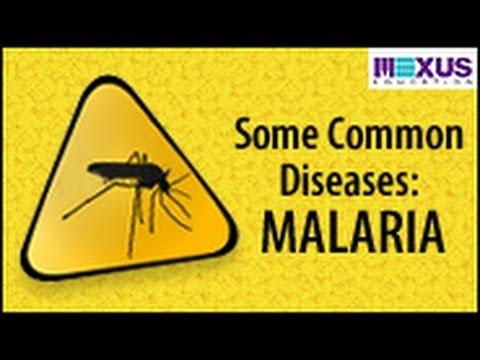 Some Common Diseases: Malaria