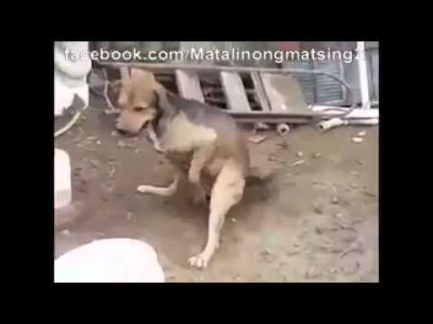 Funny Dog Masturbation With Gun Fire video