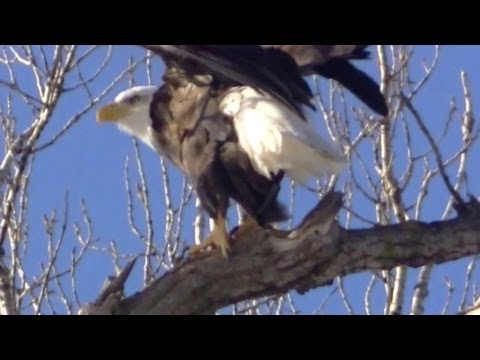Nature Minnesota In Hd ! Animal Life Minnesota Watch In Hd video