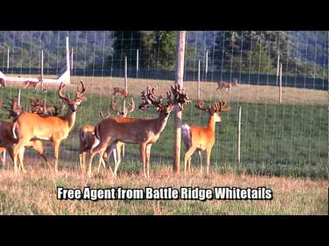 LARGEST WHITETAIL ON RECORD - FREE AGENT - DEER & WILDLIFE STORIES