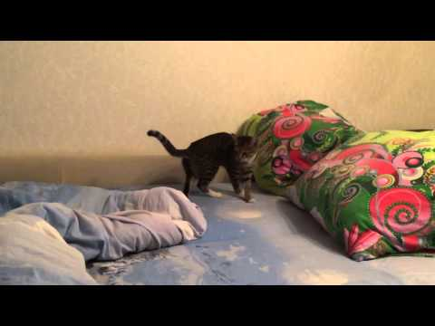 cleaning cat spray smell