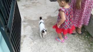 #diarialisha Bermain Bersama Kucing