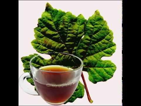 Grape Leaf Tea Health Benefits