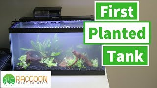 Planted Tank for a Beginner | Aquarium Plants for Beginners | Helping a Friend with His Aquarium