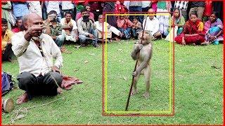 বানরের খেলা দেখে দর্শক পুরাই পাগল_Amazing Street Performers Or Monkey