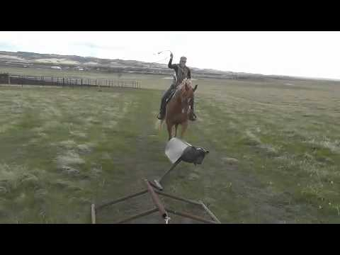 Calf Roping Dummy Sled Burley Roping Calf Sled 5-4-11