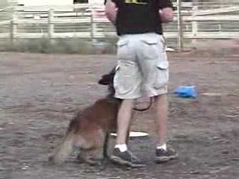 Police Dog Training Video - K9 dog training