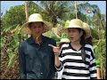 Vietnam Travel  DU LỊCH MIỆT VƯỜN CÀ MAU  Vietnam Vacations