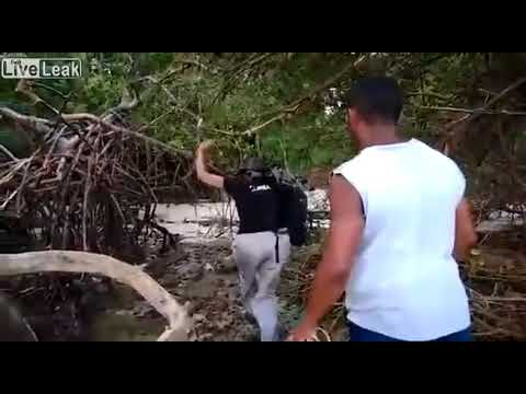 """Humpback whale is found in the woods of beach on the island of Marajó, Pará """"subscribe PLEASE"""""""