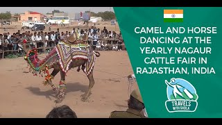 Camel and Horse Dancing at The Yearly Nagaur Cattle Fair in Rajasthan, India