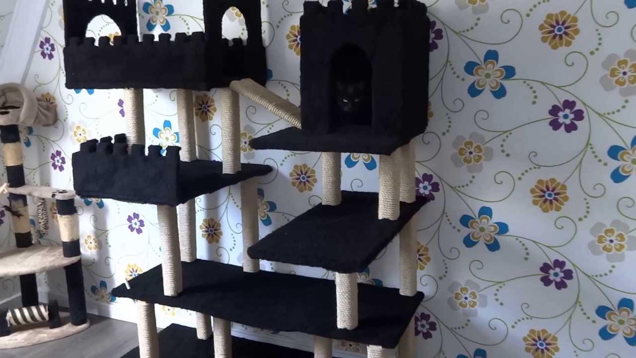 fort collins cat rescue adoption