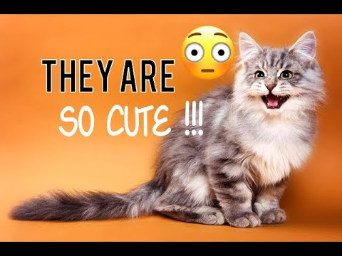 FUNNY CATS AND KITTEN MEOWING 🐱