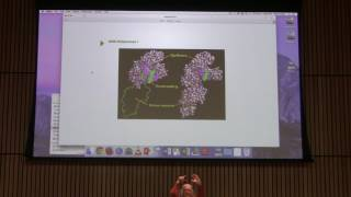 Download DNA Replication III - Kevin Ahern's BB 451 Lecture #43 2017 3Gp Mp4