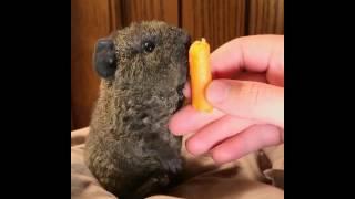 Awww he's eating a carrot.