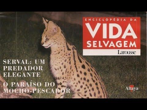 Vida Selvagem 32 - Serval: Um Predador Elegante